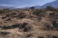 Description: Archaeological sites in West Mexico left deeply pitted and destroyed by looters